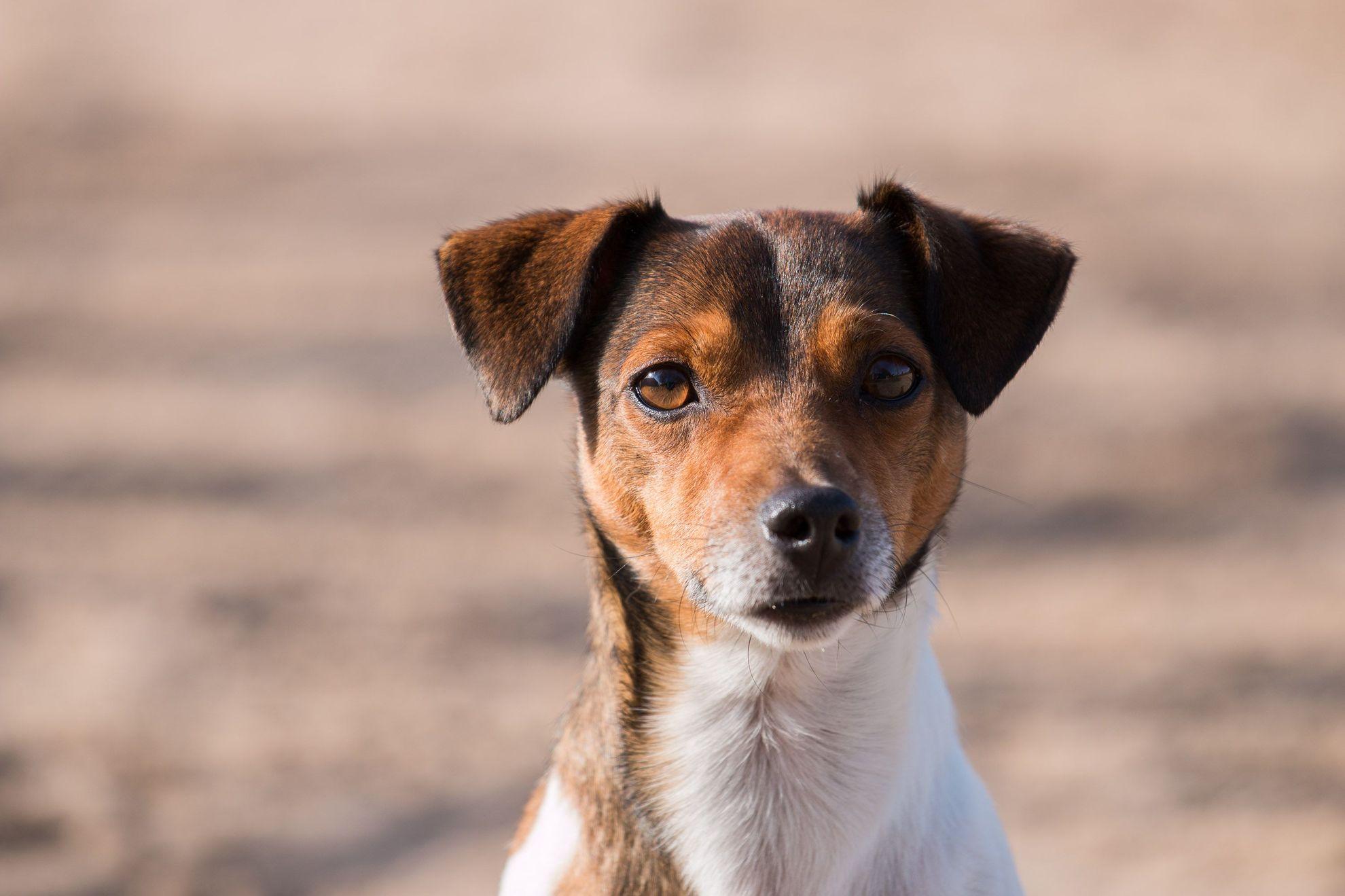 Hund2
