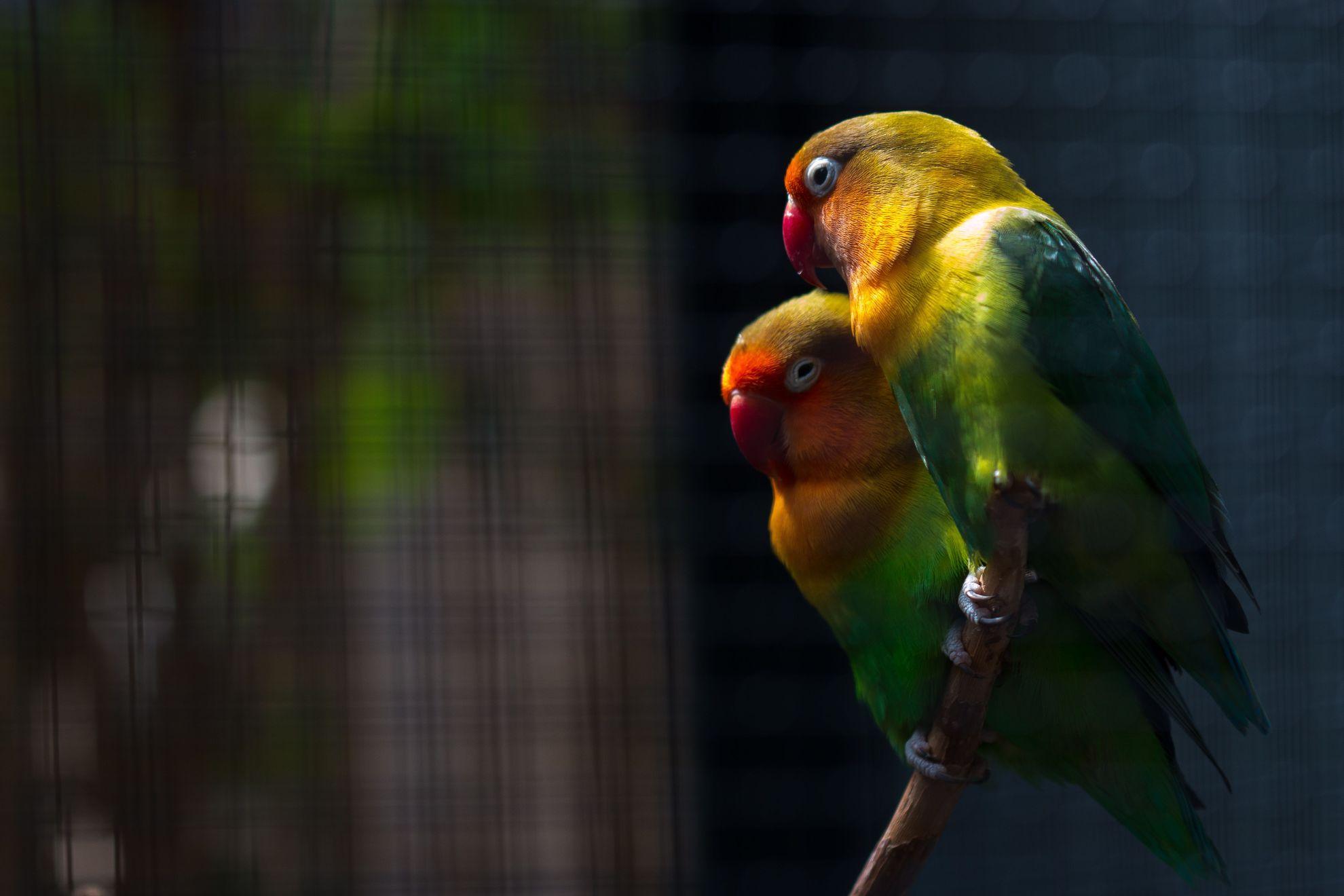 Vögel1